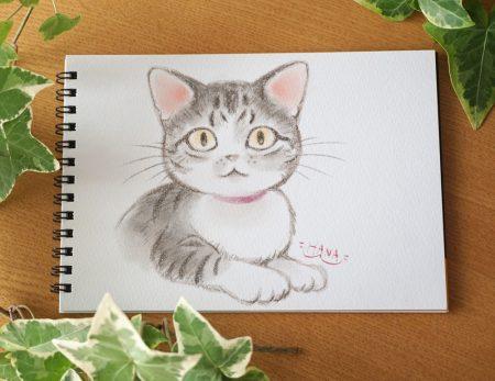 猫イラスト